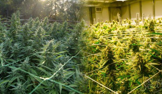 Spotting Tenants Growing Cannabis